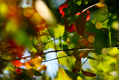colorful leaves photography art print