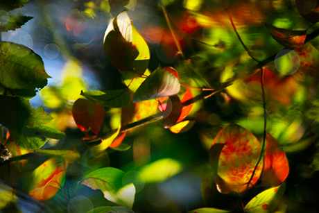 dark red green leaves photography print