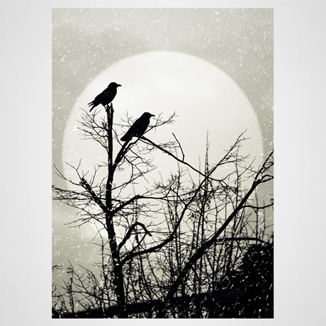 Black ravens on the tree on moon background Fine art photography